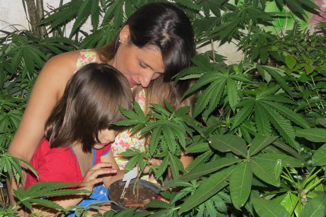 Estado do Colorado aprova lei que autoriza uso da maconha para tratamento de autismo - Papo de Pai