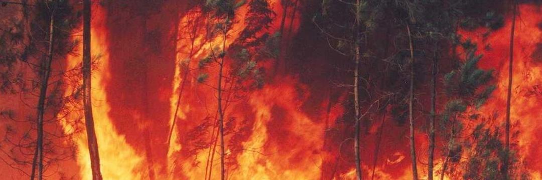 Pai exagera em 'chá de revelação' e causa incêndio florestal nos EUA