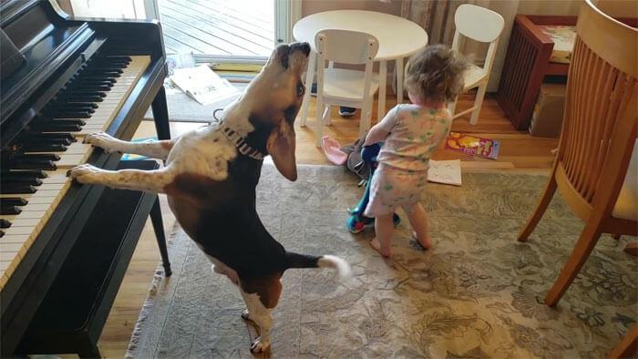 Pai capta vídeo de sua filha dançando enquanto seu cachorro toca piano - Papo de Pai