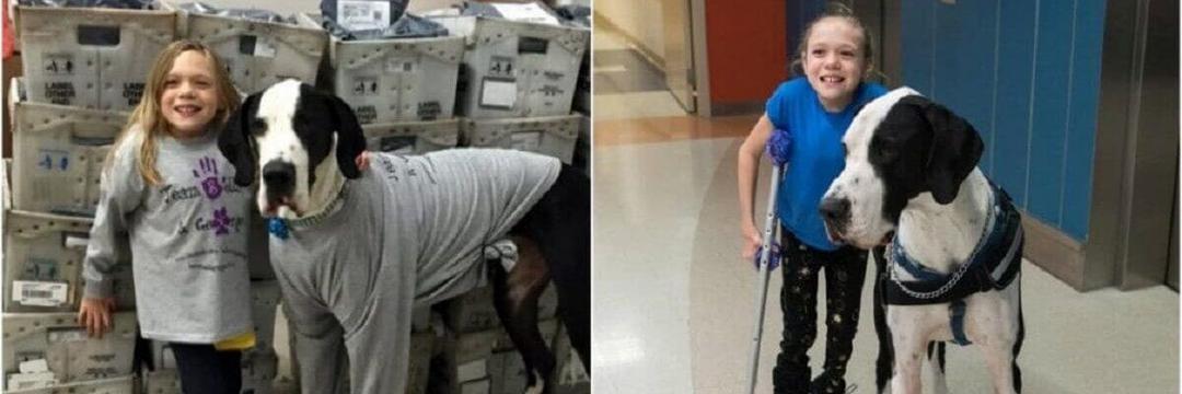 9 cirurgias não conseguiram fazê-la andar, até que um Dogue Alemão entrou em sua vida