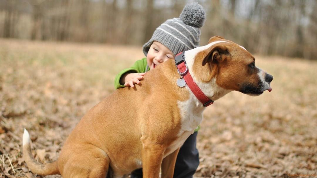 Estudo comprova: recém-nascidos que convivem com animais adoecem menos