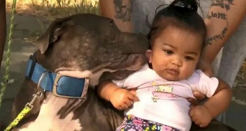 Pit bull arrasta bebê pela fralda em casa em chamas, salvando uma família inteira