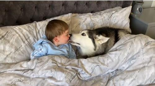 Pai flagra filho tirando cochilo com seu cachorro e vídeo viraliza!